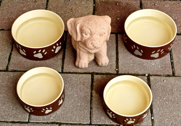 Food bowl and food - Pet Essentials to Buy for Home