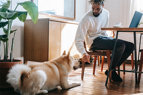 Make workplaces pet friendly - Special Things Pet Lovers Can Do