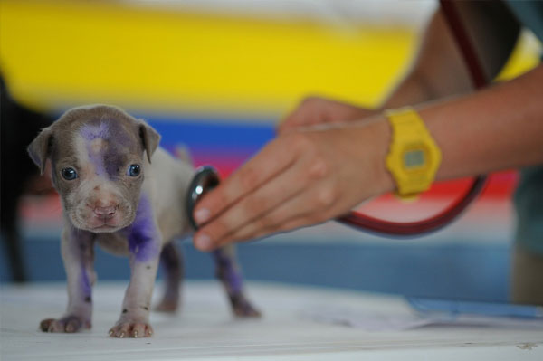 Regular checkups - How to Be a Good Pet Owner